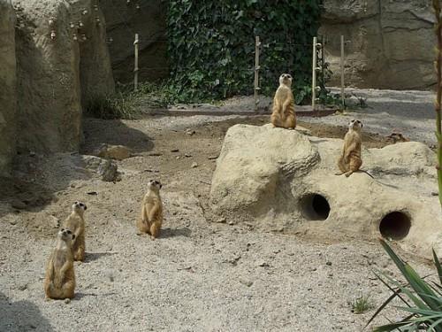 zagreb-zoo_1692284308