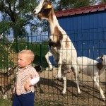 3 ideje za obisk otroškega igrišča na prostem z mini živalsko farmo