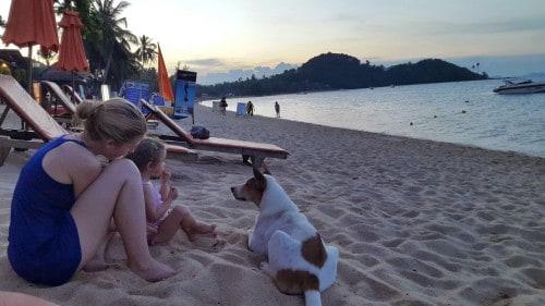 Redni gostje plaže so bili tudi prijazni potepuški psi, ki so se ob večerih hladili v mivki.