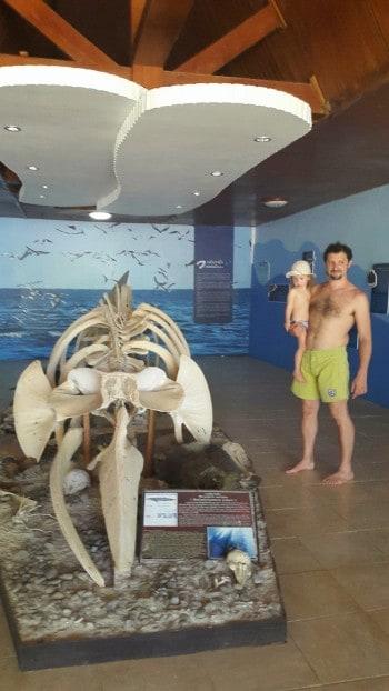 V muzeju ob okostju kita in morski želvi.