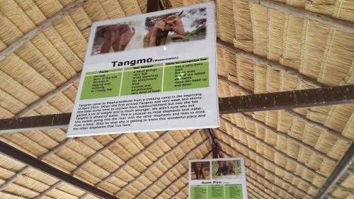 Opis slonice Tangmo, ki smo jo dobili v oskrbo.