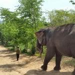 Tajska – aktivna sprostitev v deželi nasmehov