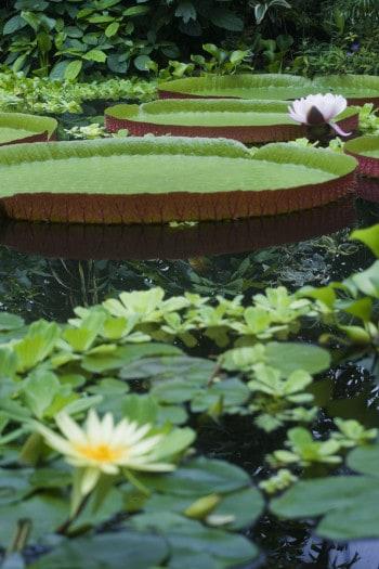 Eksotično rastlinje v Kraljevem botaničnem vrtu v Edinburghu, Škotska