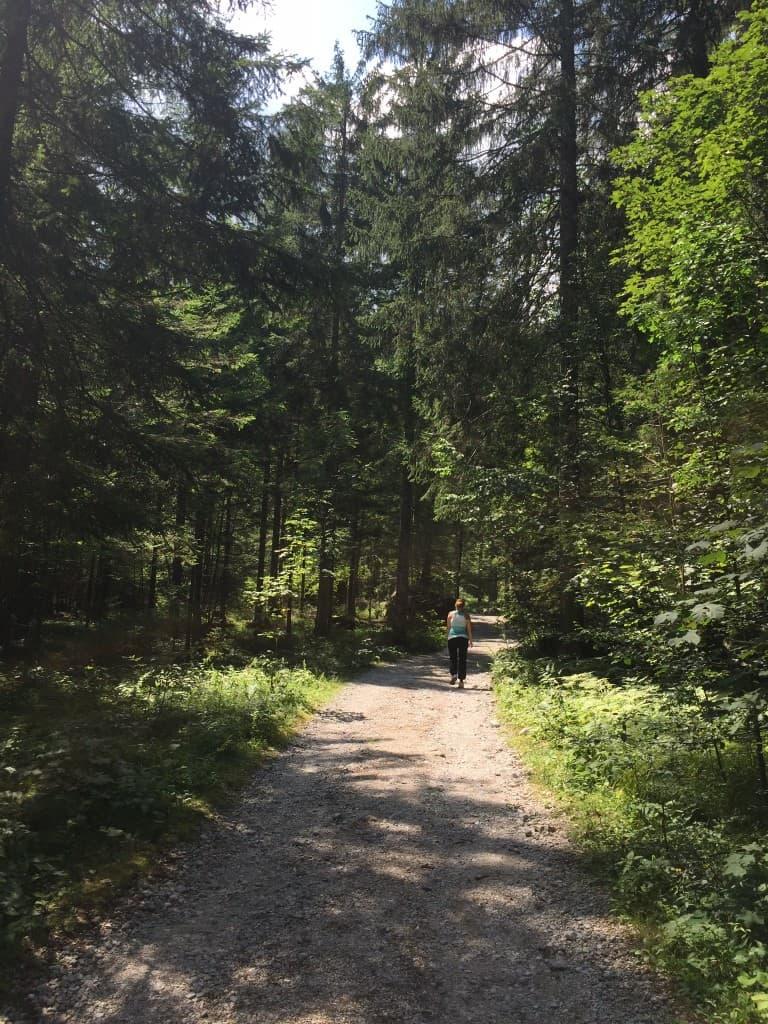 Sprehod skozi dišeči gozd