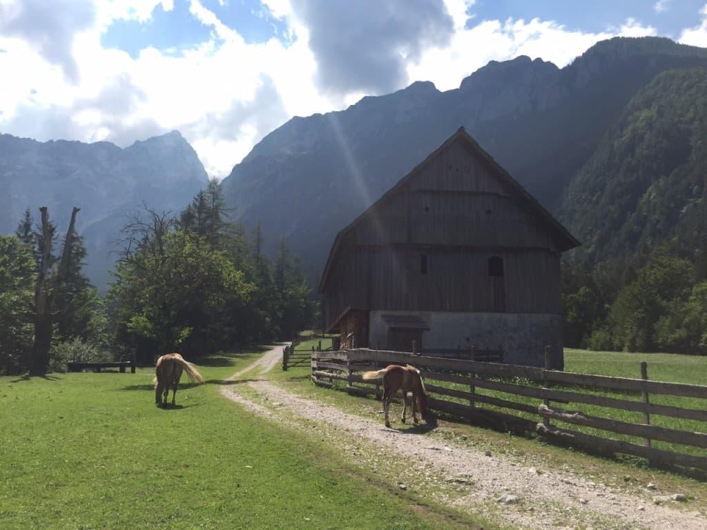 Prečudovit Robanov travnik