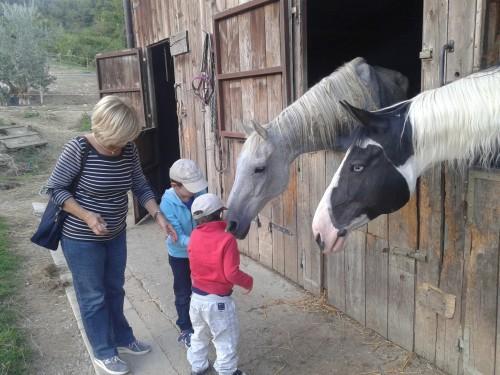 Pred pričetkom jahanja smo konje nahranili (Barberino di Muggelo, Toskana)