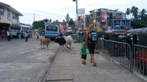 Naučite otroka kako se vede v kaotičnem prometu (Šrilanka 2015)