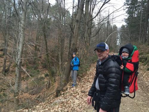 sprehod v gozdu