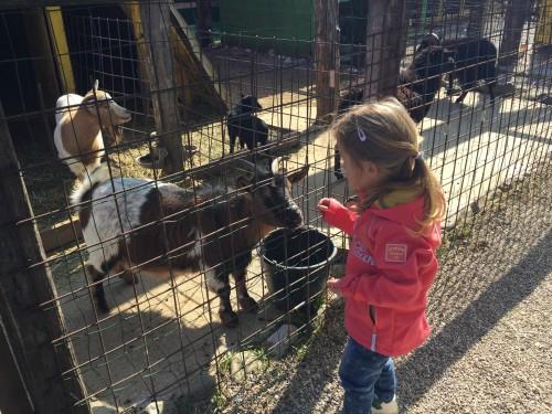 Hranjenje živali - naše najljubše opravilo, Šempeter