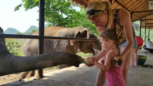 Dopoldansko hranjenje slonov s košaro sadnja pripraljeno posebej za vsakega njih, Kanchanaburi, Tajska