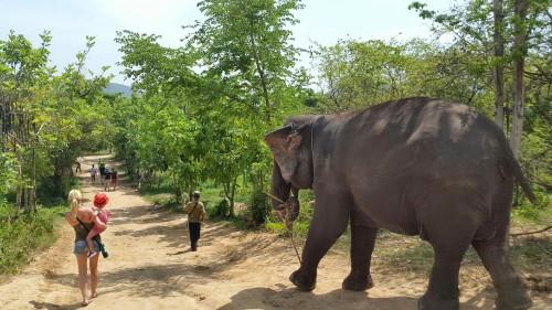 """Sprehod z """"našo"""" slonico in njenim mahmoutom (oskrbnik) do reke na kopanje, Kanchanaburi"""