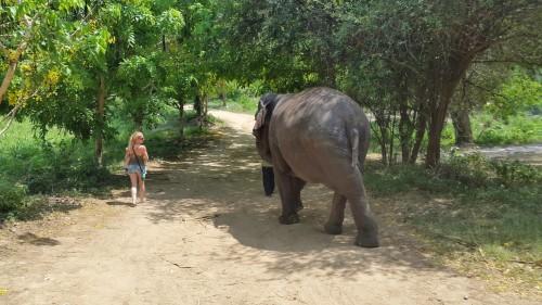Za čudovito doživetje, je dovolj, da smo lahko v njihovi bližini, Tajska