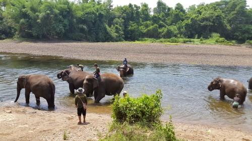 Dnevno umivanje slonov v reki, Kanchanaburi, Tajska