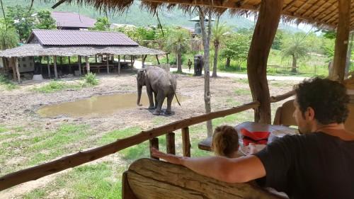 Kosilo z opazovanjem slonov, Kanchanaburi, Tajska