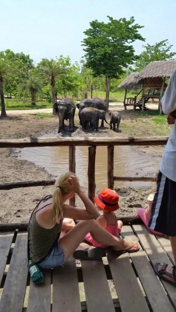 Opazovanje slonov pri kopanju v blatu, Kanchanaburi, Tajska