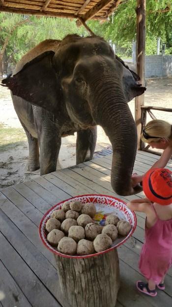 """Sticky rice"" krogljice so pripravljene, Kanchanabui, Tajska"