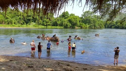 Osvežitev smo si privoščili vsi skupaj, mi, sloni in zavetiški psi, Kanchanaburi, Tajska