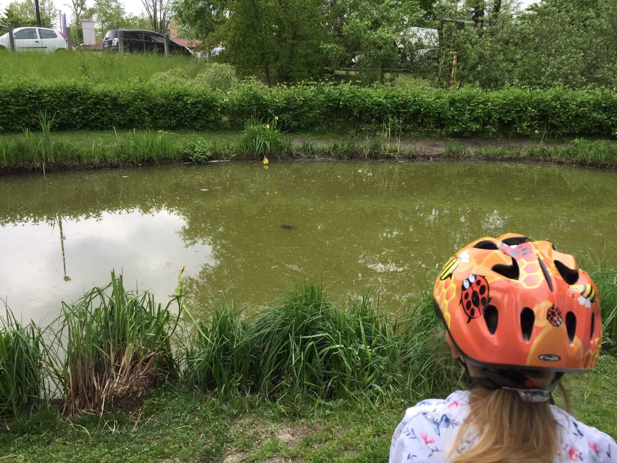 Opazovanje želve v ribniku, Ljubljana