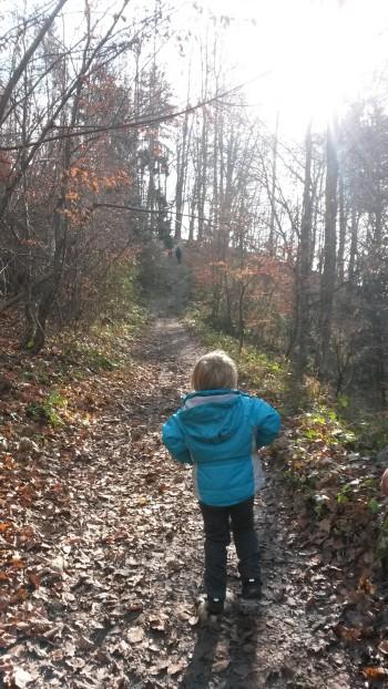 Gozdno pot na Rašico bodo zmogli tudi manj izkušeni pohodniki