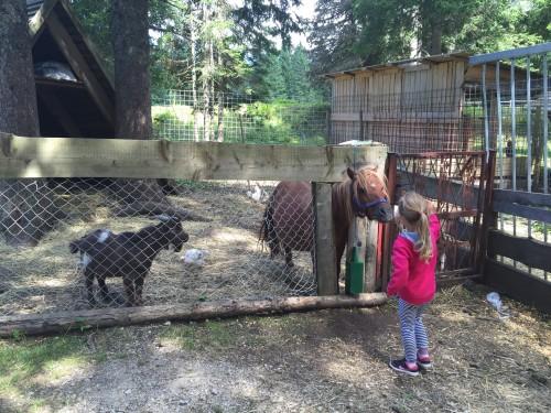 Hranjenje živali je vedno zabavno, Pohorje