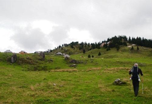 140914_krave-na-mali-planini_desno-zgoraj-jars_ki-dom