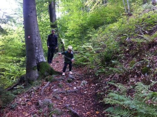 čudovit gozd