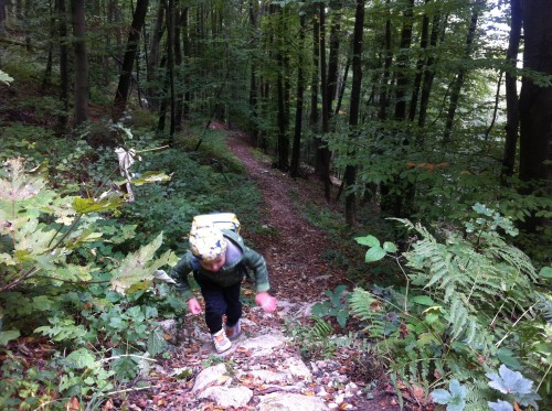 Pot vas vodi po gozdu in je na trenutke strma (Planinski dom Ušte)