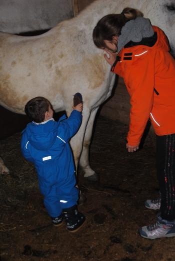 Krtačenje konja