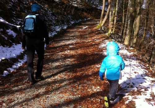 Pot v gozd