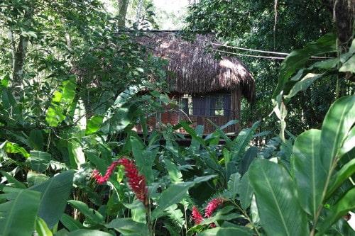 Naša cabana v džungli El Panchana (Mehika)
