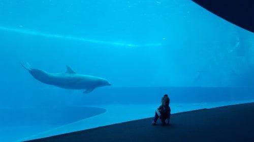 Obisk akvarija v Genovi