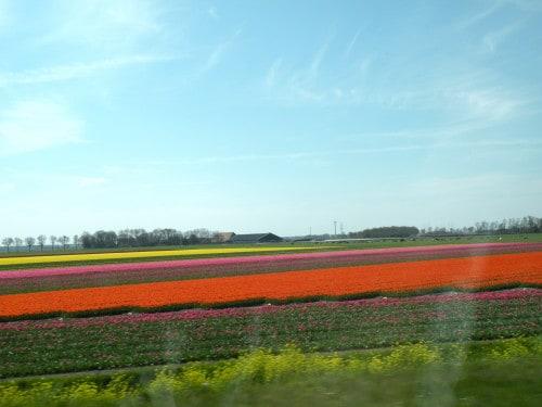 Na poti v Giethoorn so nas spremljala živobarvna polja tulipanov, Nizozemska