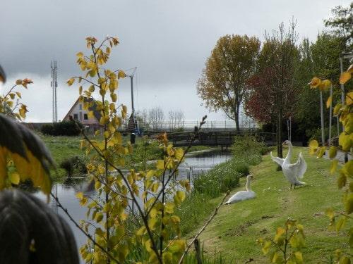 Labodja predstava ob kanalu v Leiderdropu, Nizozemska