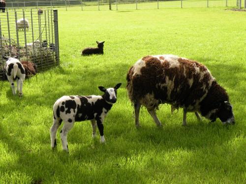 Mini kmetija v Leiderdropu, Nizozemska