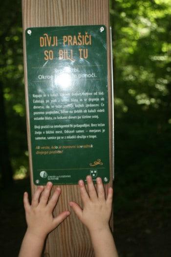 Usmerjevalne table v Mestnem gozdu nam duhovito predstavijo »gozdna« dejstva, Celje
