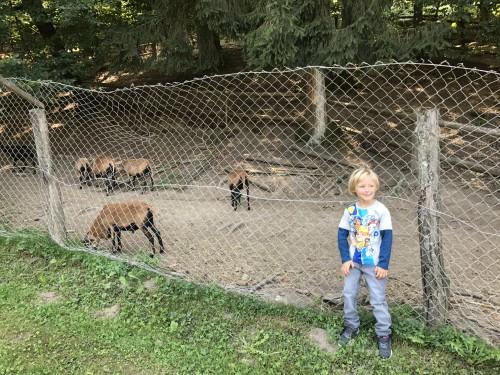 Na ranču so živali iz vsega sveta, pa tudi bolj domače sorte (naš mulc oblečen v oblačila Blukids)