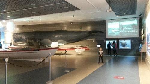 V muzeju kitov je predstavljena tudi kruta zgodovina kitolovstva na otoku (Madeira)