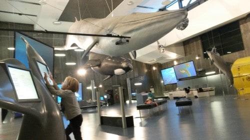 Interaktivna razstava morskih živali v muzejev kitov, Madeira