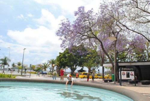 Staro jedro Funchala zaznamujejo tudi cvetoča drevesa (Madeira)