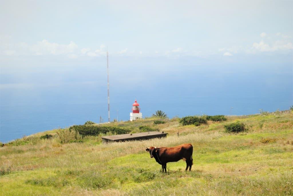 Živo zeleni pašniki in svetilnik na Ponta do Pargo, Madeira