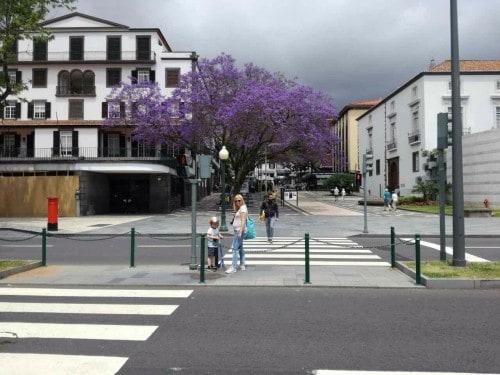 Drugo tromesečje velja za najbolj optimalno za potovanje v nosečnosti (Funchal, Madeira)