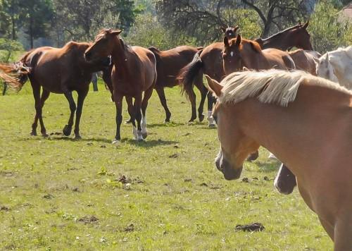 Čudoviti konji na na prostem, Ranč Burger