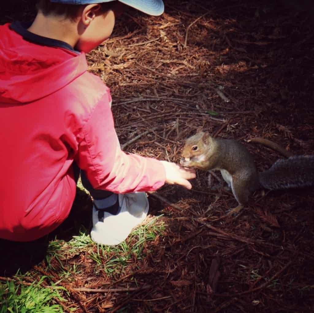 Park z vevericami v bližini Golden gate, San Francisco (Potovanje z otroki po Kaliforniji)