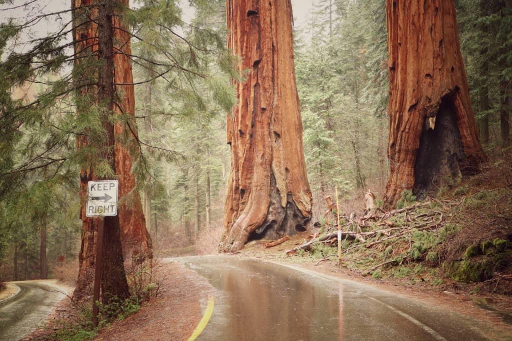 Sequoia narodni park (Potovanje z otroki po Kaliforniji)