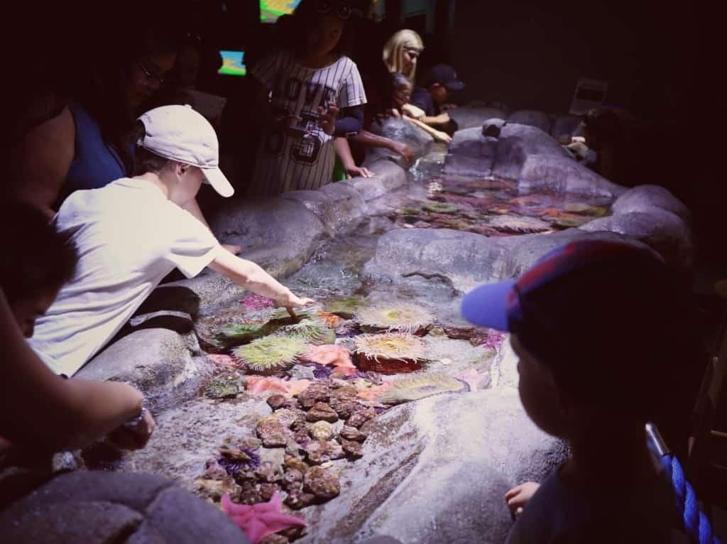 Aquarium of the Pacific, Los Angeles (Potovanje z otroki po Kaliforniji)