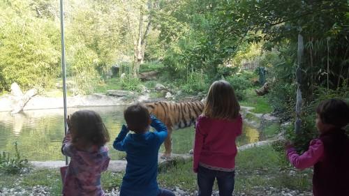 Čisto blizu tigra