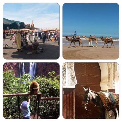 Spoznavanje raznolikih živali na poti po Maroku
