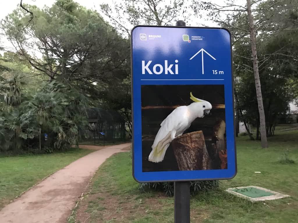 Najbolj znani prebivalec Brionov Koki je bil v času našega obiska na počitnicah na toplem (NP Brioni)