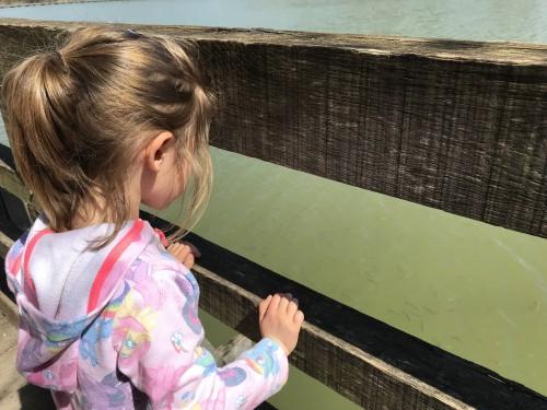 Opazovanje in hranjenje ribic na poti, Šmartinsko jezero pri Celju