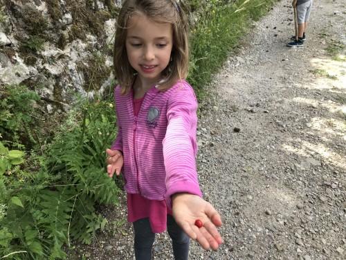 Sladkali smo se z gozdnimi jagodami, izlet Jamnik